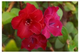 floral-comp-1